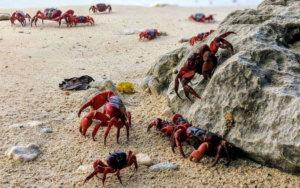 Gruppenreise nach Christmas Island, Indischer Ozean Australien