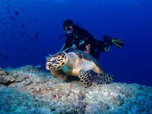 Malediven Tauchsafari   Male Atoll, Ari Atoll, Felhidoo Atoll